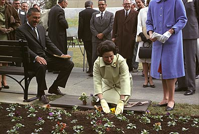 Lady Bird Johnson plants pansies in White House garden as Secretary Stewart Udall and others look on