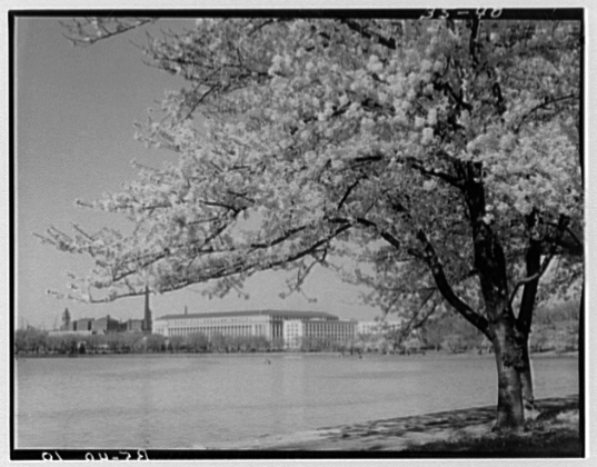 Liberty Loan building seen through the trees across the tidal basin, c. 1930.