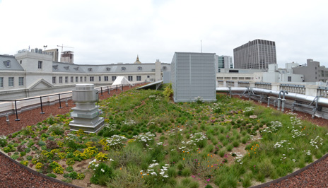 Green roof at 50 United Nations Plaza
