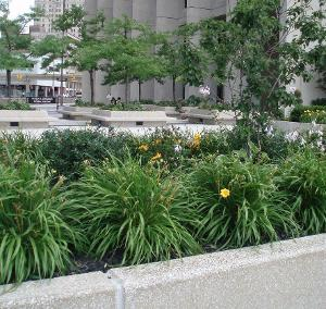 Long shot of McNamara Federal Plaza with flowerbox planters in foreground and building behind